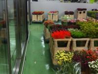 glatte Beschichtung mit Dekorchipseinstreuung, Blumengeschäft, veganer Fußboden